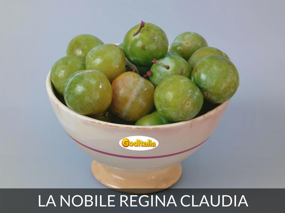 La nobile regina claudia: le varietà antiche della susina
